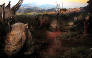 "Rhinos, from the series ""Natural History"" © Traer Scott"