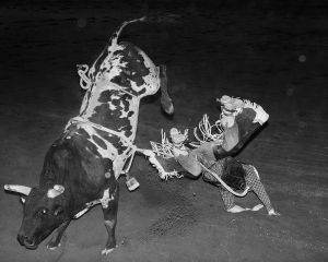 Bull Rider falling, Curry Merry Muster Festival, Cloncurry, QLD Australia, 2015.