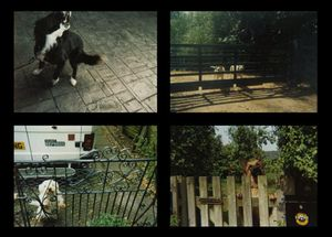 © Crag Pilling, Todmorden, West Yorkshire; James Bennell, Radford, Conventry; Joe McDonald, Royston, Cambridgeshire