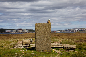 A sheep and a sea bird at the Sullom Voe Terminal which covers 1000 hectares of windswept moorland on the Mainland. It is one of the largest oil and liquefied gas terminals in Europe, and also one of the cleanest in the world.