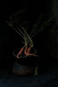 Carrot. Three.