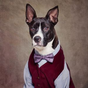 Shelter Pets Project - Petey