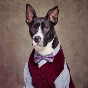Shelter Pets Project - Petey