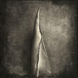 bamboo© Gary