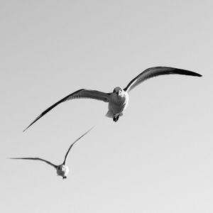 Texas City Dike - Two Gulls