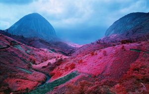 Poison Glen, south Kivu, eastern Congo, 2012 © Richard Mosse. Courtesy of the artist and Jack Shainman Gallery.
