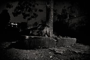 A horse resting. Bakshi Bazaar, 2006. © Munem Wasif