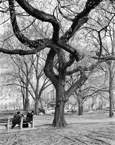 American Elm, Central Park, New York © Mitch Epstein, part of the Prix Pictet retrospective