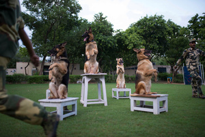 A demonstration exercise at NTCD to highlight the efficiency of the trained canines and their handlers.