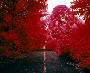 The Unseen, The Red Forest
