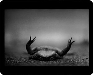 """Untitled"" (Toad), 2008 © Giacomo Brunelli"