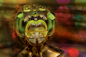 Droplet On Compound Eyes
