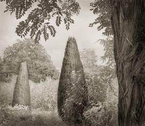 "Trees, Hidcote, 18.5x16"" Platinum Palladium © Beth Dow"