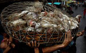 The chicken market. Kolkata, India.
