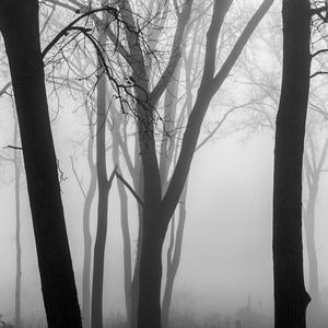 Forest Fog 1