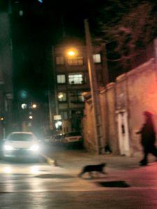 Women on isfahan's Street