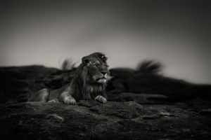 """""""Before the Rain."""" Masai mara, Kenya."""
