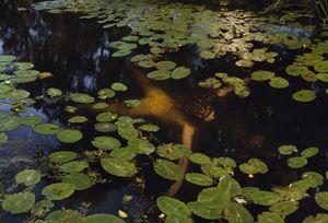 Schoten-waterlelies, 2014. Showing at Camara Ooscura Galeria de Arte. Courtesy Art Paris Art Fair.