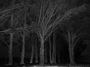 Suburban trees.