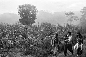 Townspeople arrive at the gravesite that sits along the edge of a cornfield.  Everyday, people come to watch the exhumation, and to look for signs of their lost relatives. © Victor Blue, 2004