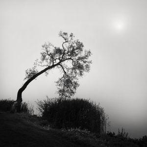 Leaning Tree © Frang Dushaj