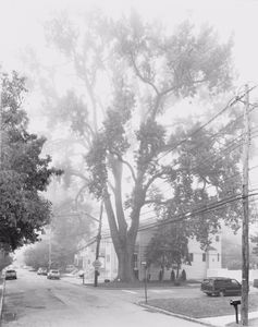 "Eastern Cottonwood, Sprague Avenue, Staten Island II 2011. From the series ""New York Arbor."" Showing at Galerie Thomas Zander. Courtesy of Photo London."