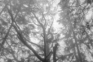 Soomaa - land of bogs VIII