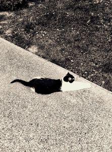 Stray Cat 13