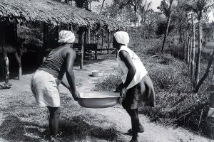 Women  works in the manufacture of cassava flour in the Quilombo of Curiaú village in Amapá northern Brazil,