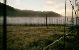 Sunrise and mist. New Zealand.