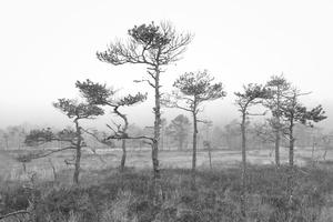 Soomaa - land of bogs IV