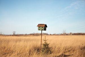 Birdhouse, 2011