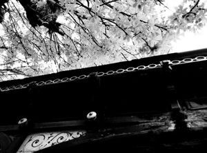 Roof and Tree 2