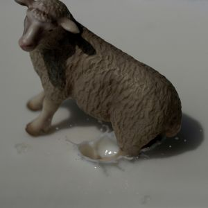 "A Slippery Sheep, From The Series ""Sacrifice""@ DongwookLee, 2011"