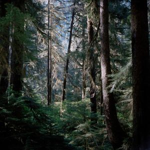 The Sol Duc Rainforest in the Olympic National Park, Washington