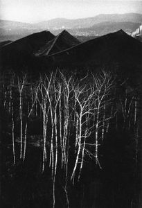 Forest near coal heaps, 1979, from Silesia (1978-1979) © Michal Cala (Poland), from the exhibition Behind Walls: Eastern Europe before 1989. Courtesy of the Noorderlicht Photofestival 2008.