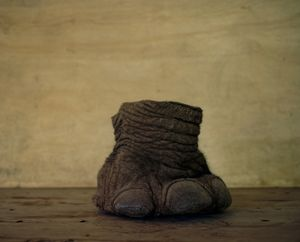 elephants foot, northern kenya-from the series 'with butterflies and warriors'-David Chancellor