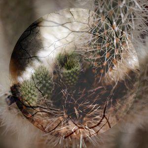 Ischemia © Dayna Bartoli