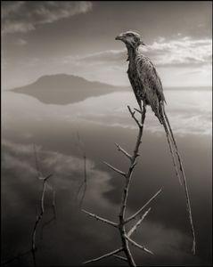 Petrified Mousebird © Nick Brandt. Courtesy of Edwynn Houk Gallery, New York