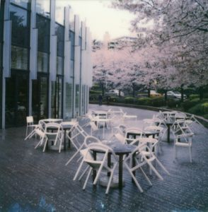 Tokyo Cherry Blossoms 8