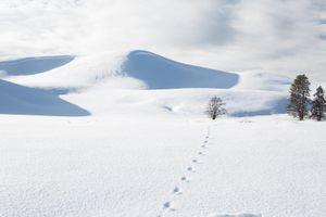 Footsteps in Hayden Valley, Yellowstone