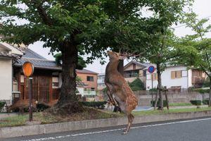 Prancing Deer © Yoko Ishii