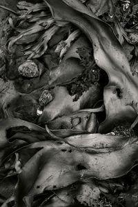 Seaweed 564, Seawall, Maine © Alan Henriksen