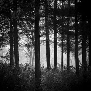 Forest Fog 10