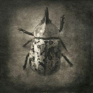beetle© Gary