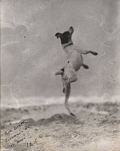 Jacques Henri Lartigue, Toby, Royan, 1923. Courtesy Pace/MacGill Gallery, New York