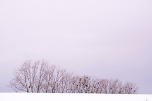 Winter Horizon in the Vicinity -04