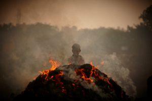 India ego© Youngho Kang