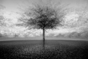 stadtbaum#9