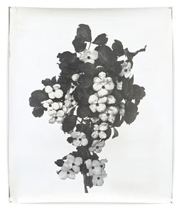Nature Morte 8, 162 x 127 cm, Silver Gelatin Print, Mixed Media © Jeff Cowen